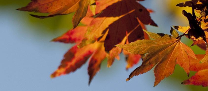 Fall colour in the UBC Botanical Garden