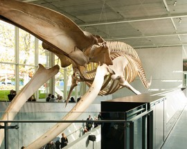 Awe-inspiring Biodiversity Outreach: Beaty Biodiversity Museum