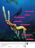 SAEprintad-Seahorse-7-875x10-75-1