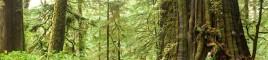 Big Tree Registry Header