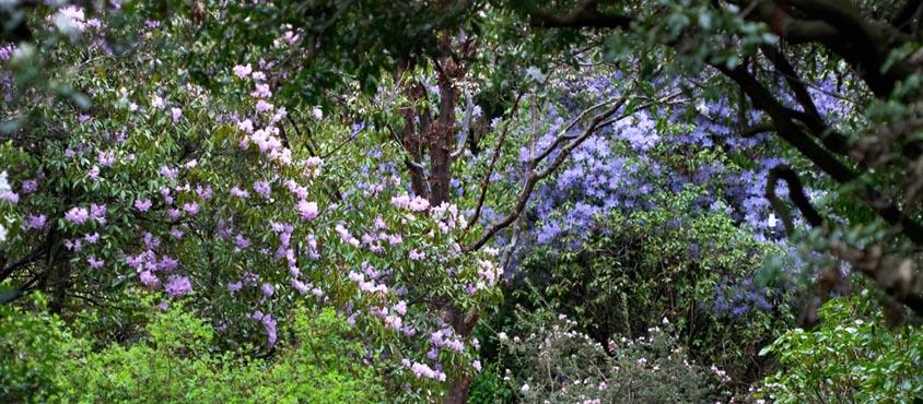 The David C.Lam Asian Garden. Credit: UBC Botanical Garden