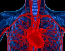 Integrated approaches to heart and lung care