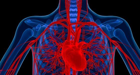heart-lung