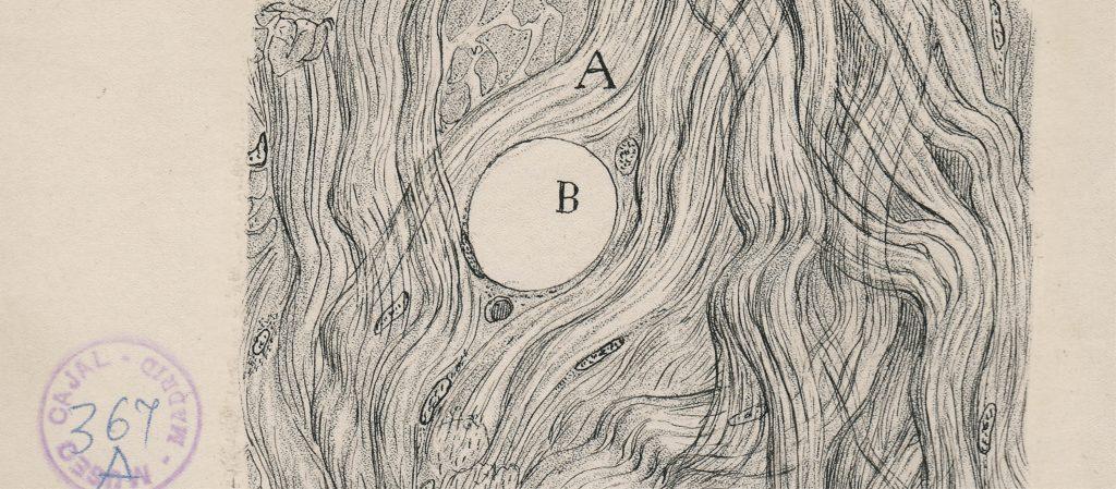 Image by Santiago Ramon y Cajal
